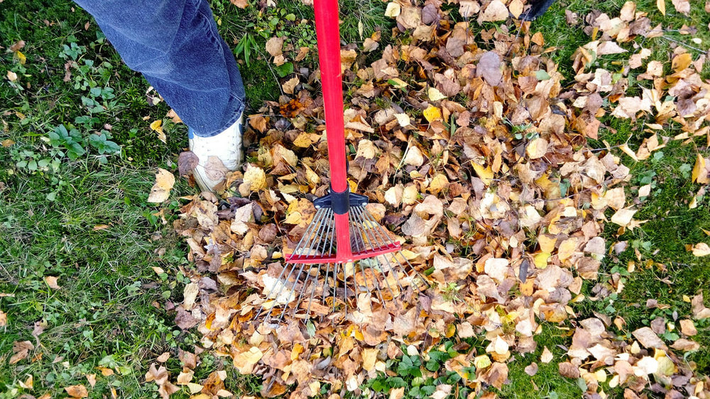 raking leaves blog
