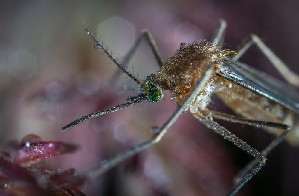 With the presence of West Nile, Malaria and Zika, Mosquitoes area serious health threat.  Mosquitos cause allergic reactions from bites cause itchy, inflamed marks on the body.  When scratched, mosquito bites become even more irritated.