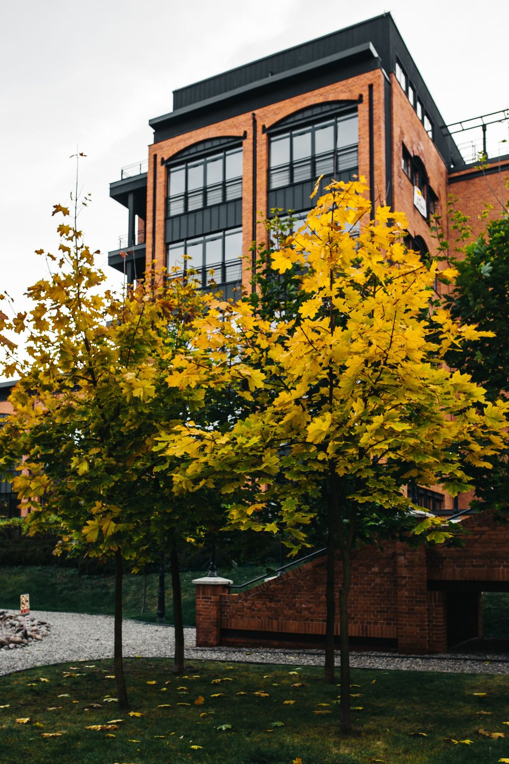 Autumn threes and brick building.jpg