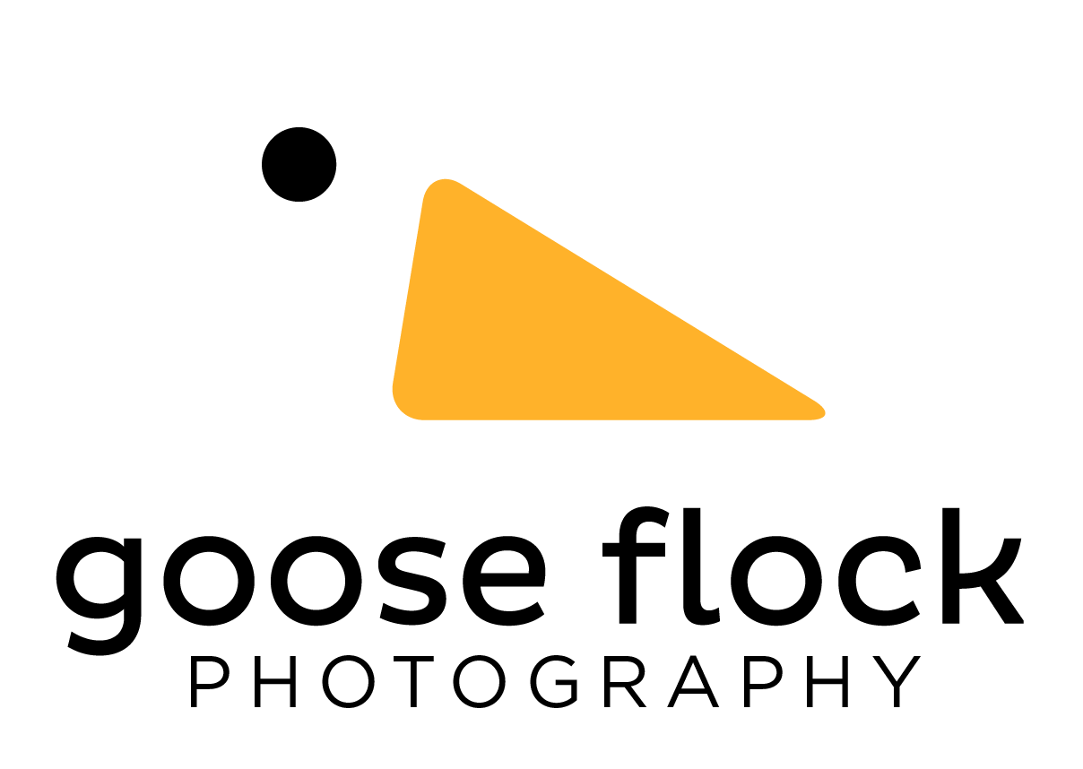 Goose Flock Photography