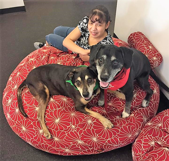 pet therapy  - Specially trained dogs visit the program to work with individuals who like to interact with pets. Physical contact can help lower blood pressure and provide stress relief. The interaction also promotes gentleness, caring and safety with pets.