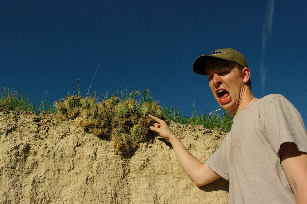 Ow, a cactus!