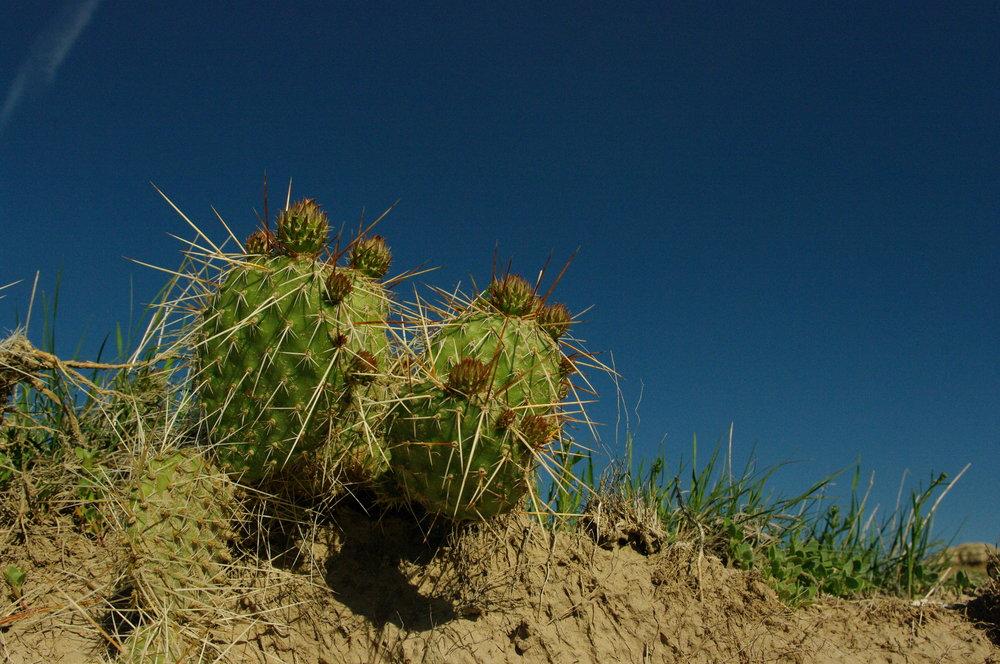 Scenic cactus