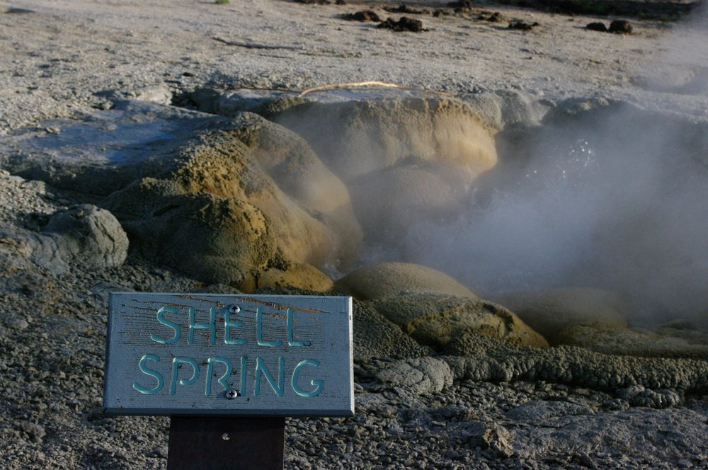 Shell Spring