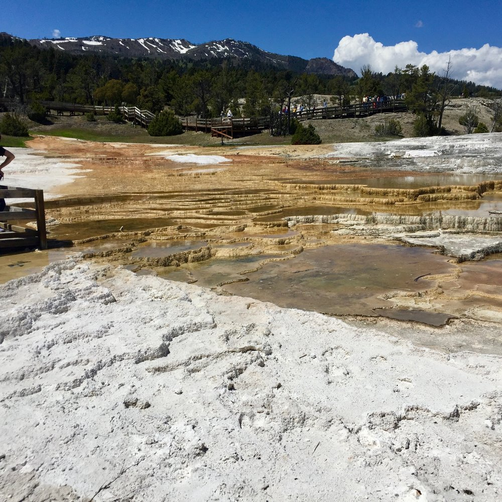 Mammoth Springs Main Terrace