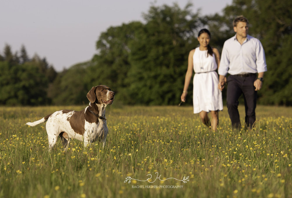 Jersey photographer - couple walking dog in meadow
