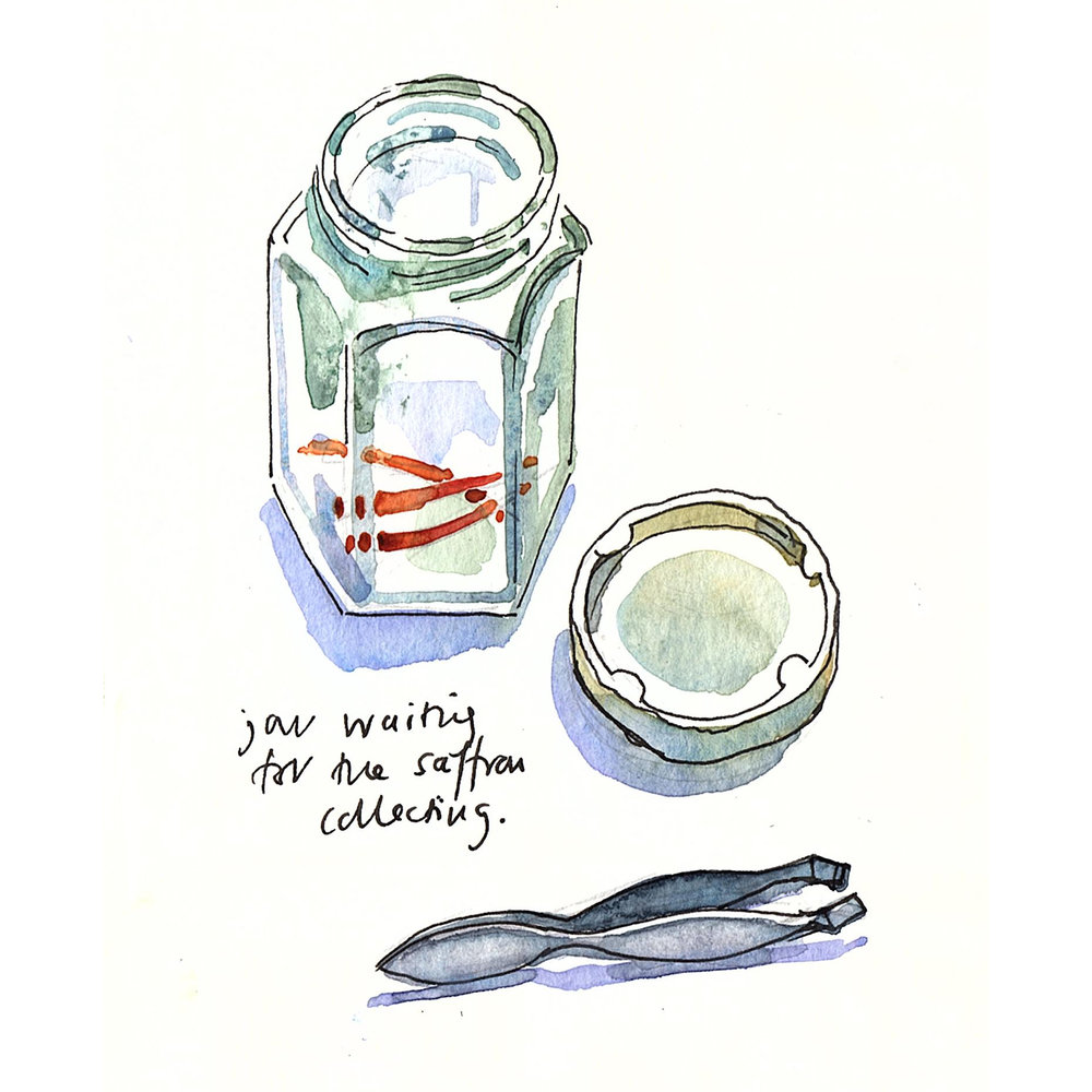 jar and tweezers for Squarespace.jpg