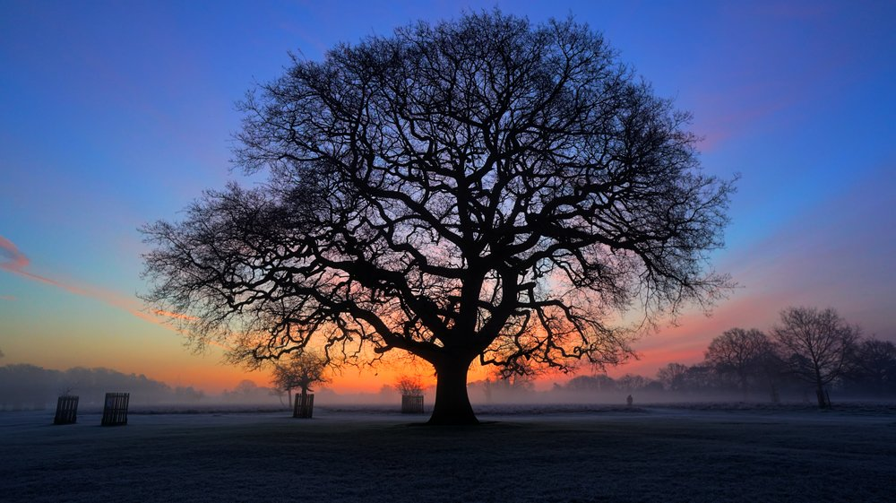 londonbushytree.jpg