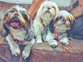 """KARRIE - """"BUTTONS, BELLA & MONKEY. I'M HOPING TO GET A SERVICE ANIMAL BUT UNTIL THEN, THESE WILL DO : )"""""""
