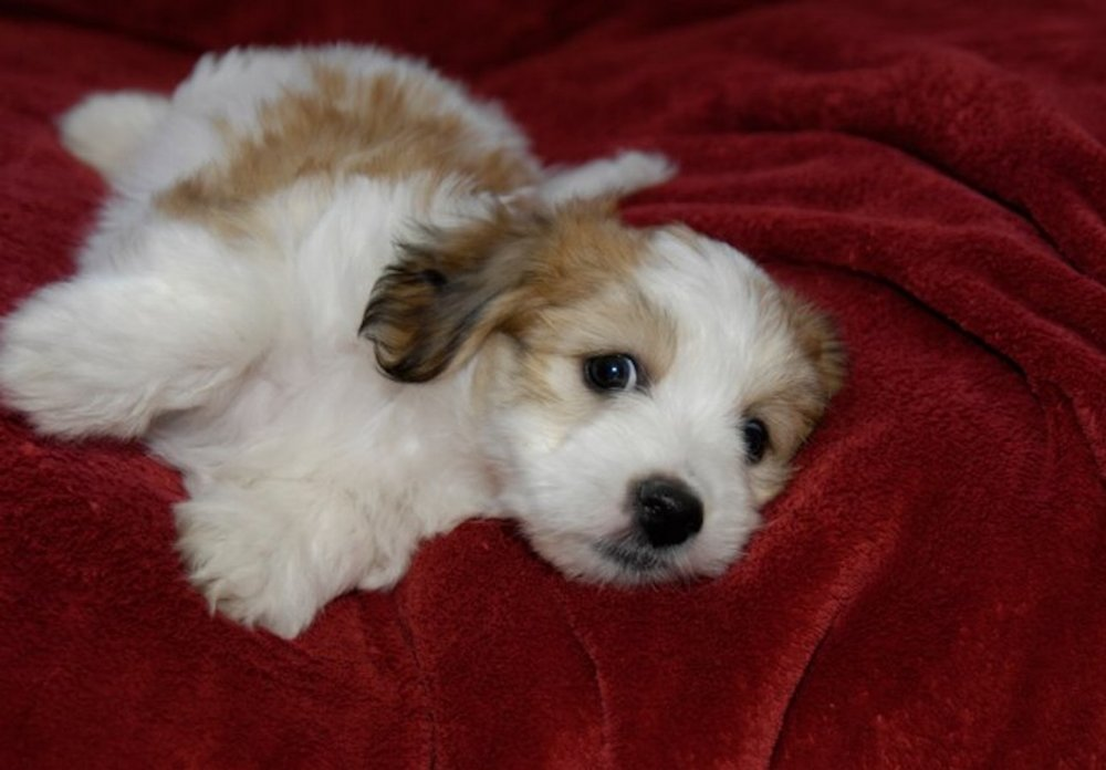 This was my first formal photo session, before I went to live with Mama, so I was less than 8 weeks old.