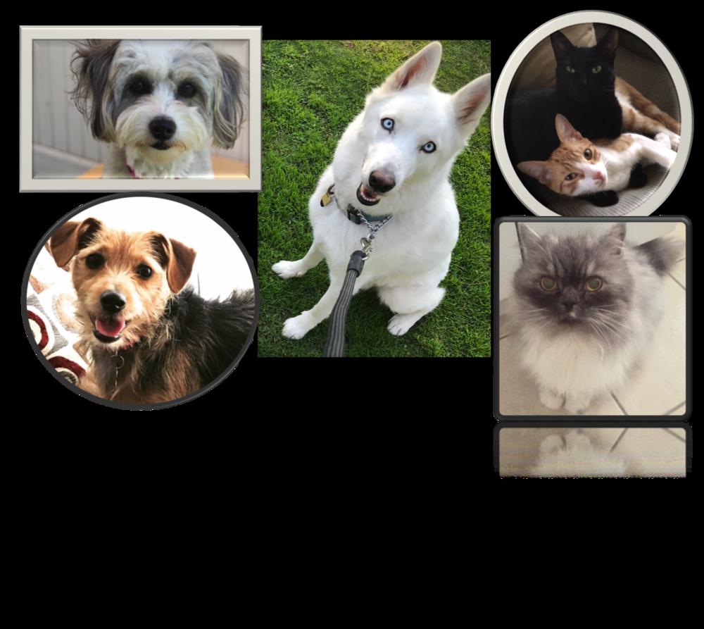 Collage of SweisKloss Pets