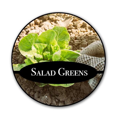 salad-greens_text.jpg