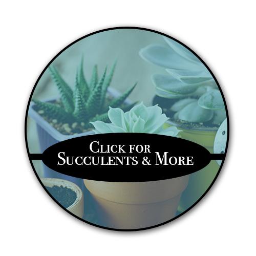 click-for-succulents.jpg
