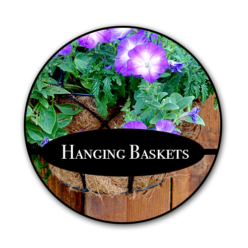 hanging-baskets_text.jpg