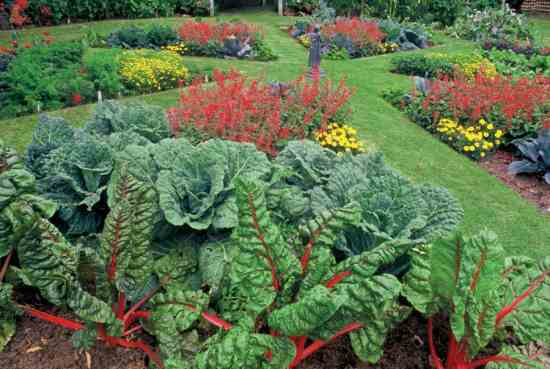 NH-SO11-ediblelandscaping-swiss-chard.jpg
