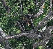 Hill County Camo - Cedar