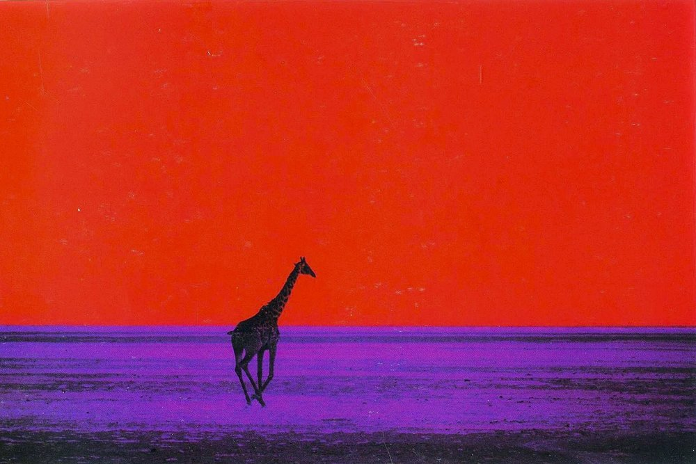 Credit: https://davedye.com/2017/11/09/hands-up-whos-heard-of-pete-turner/giraffes-pete-turner-1964/