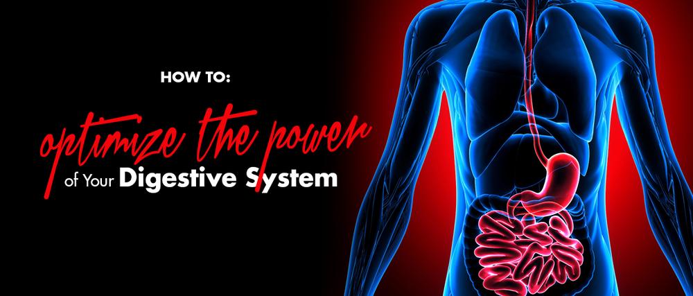 enertic-nervous-system.png