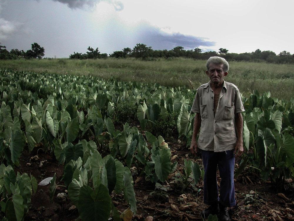 Florentino_in field of malanga.jpg