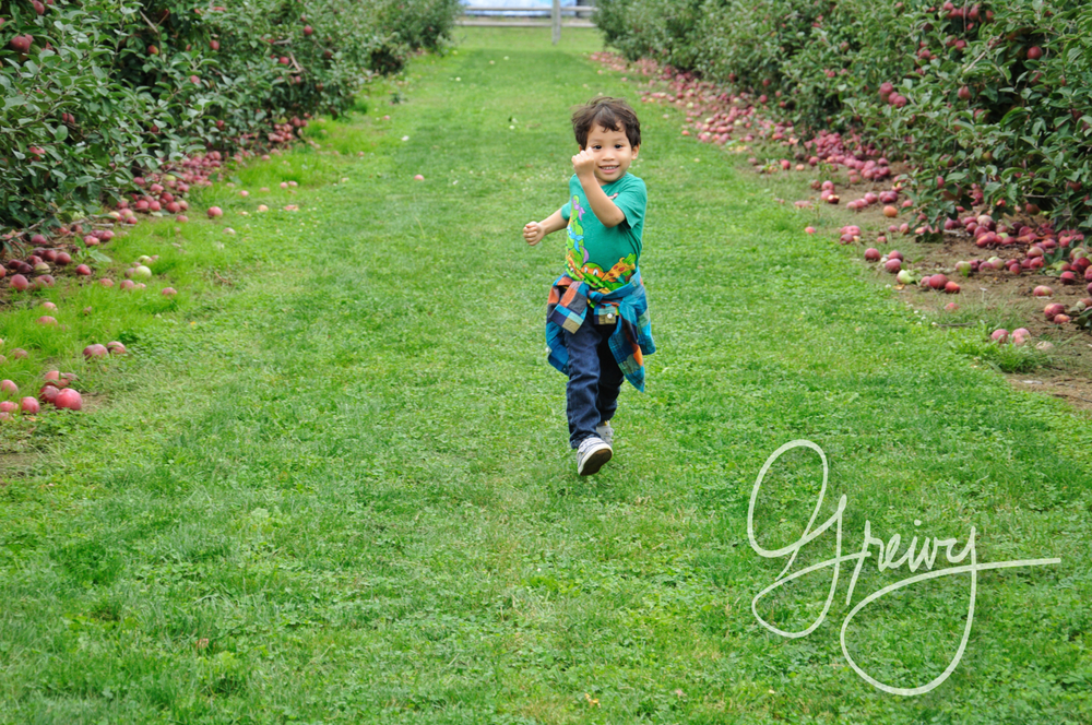 Greivy.com Hamptons Apple Picking - 5.png