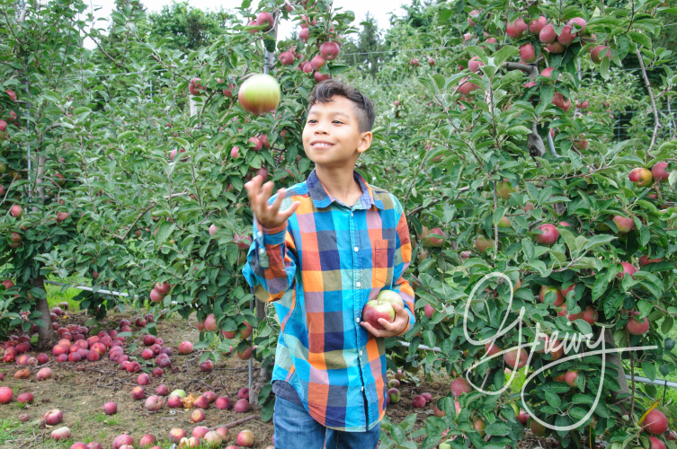 Greivy.com Hamptons Apple Picking - 16.png