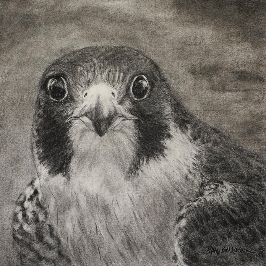 """Falcon, 12"""" x 12"""""""