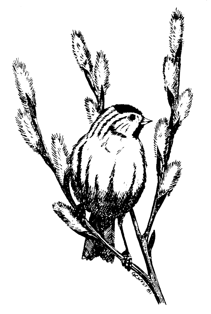 Arctic Audubon SocietyP.O. Box 82098Fairbanks, AK 99708 -