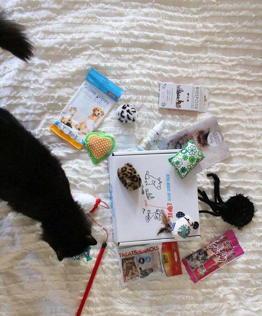 miaou-box-chat-blog-mode-bordeaux-15