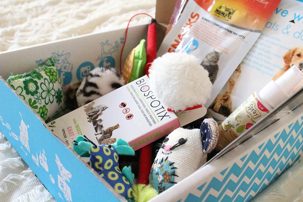 miaou-box-chat-blog-mode-bordeaux-7