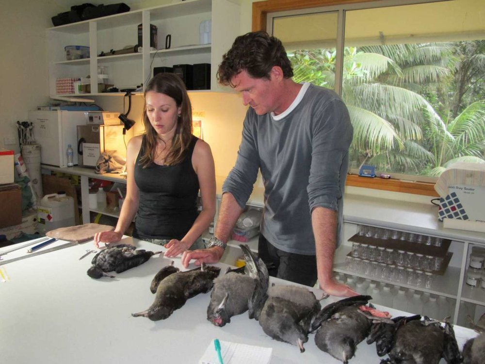 Craig with research scientist Jennifer Lavers and the shearwaters of Lord Howe Island