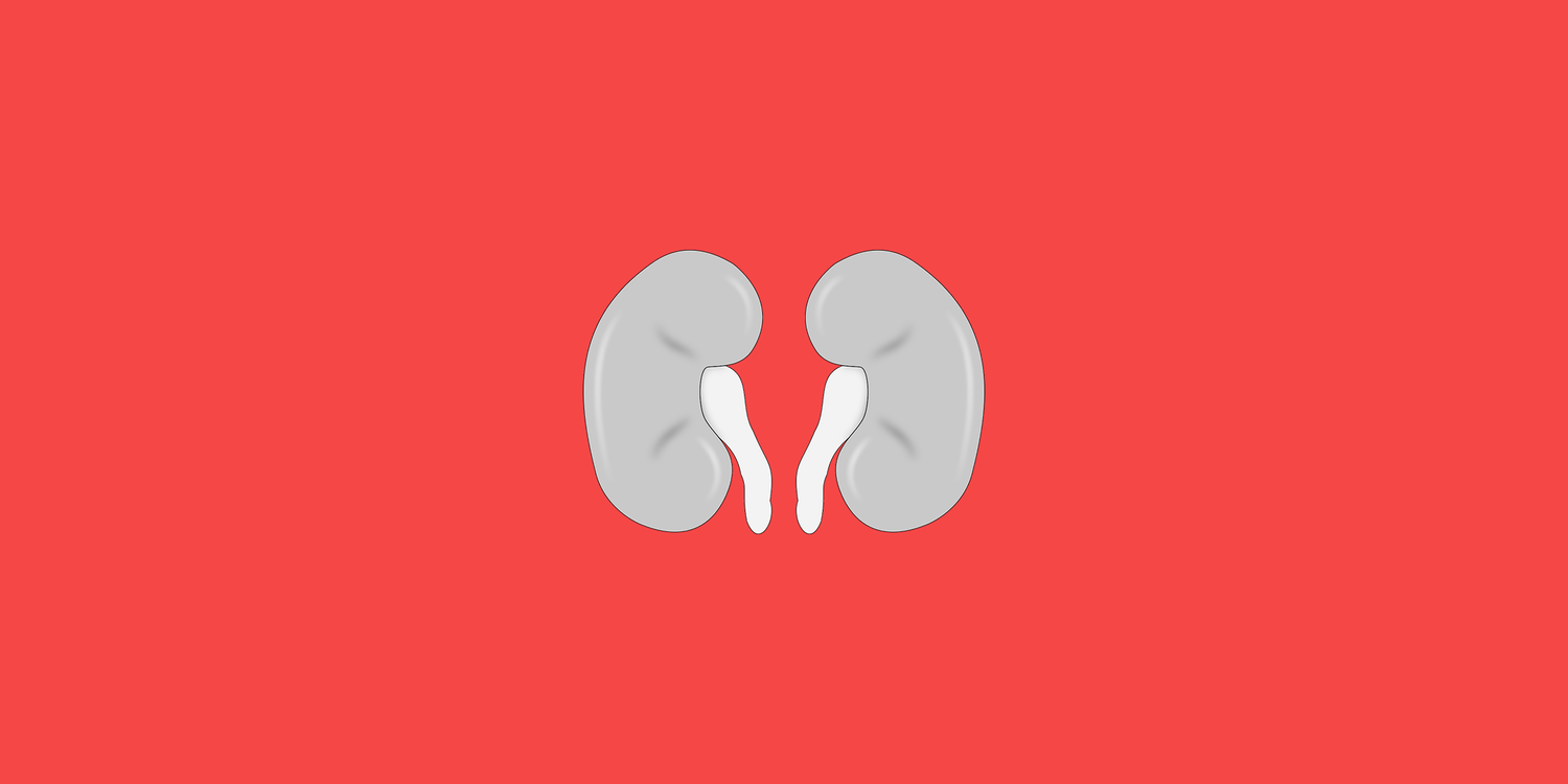 How An Underactive Thyroid Affects The Kidneys Boost Thyroid Hashimoto S And Hypothyroid App