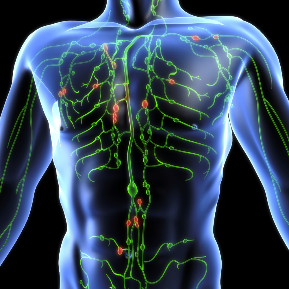 What-is-lymph-nodes.png