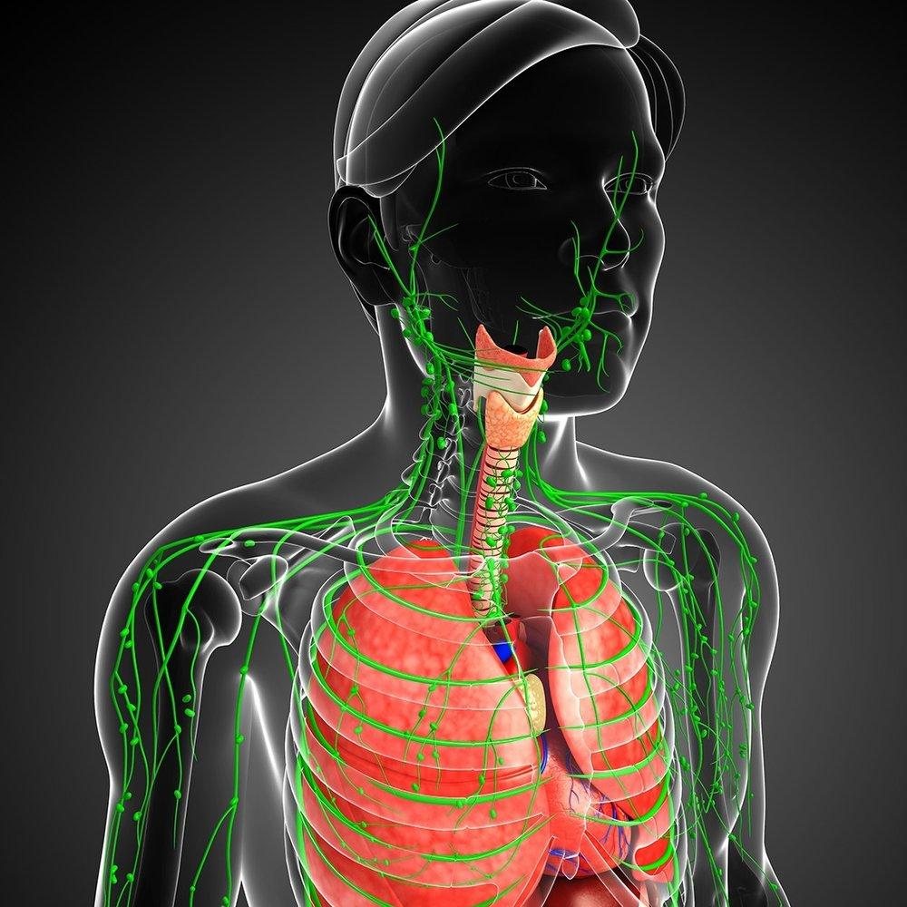 3D-Lymph-Lung-Med-Pic.jpg