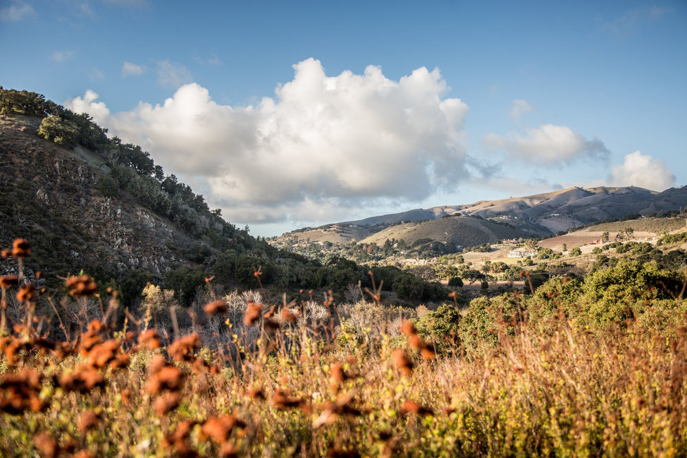 Garland Park - This park is home to a variety of landscapes that occur at elevations from 200 to 2,000 feet. From the willow covered banks of the Carmel River through the cottonwood-sycamore stands of the old floodplain, the trails ascend steeply.
