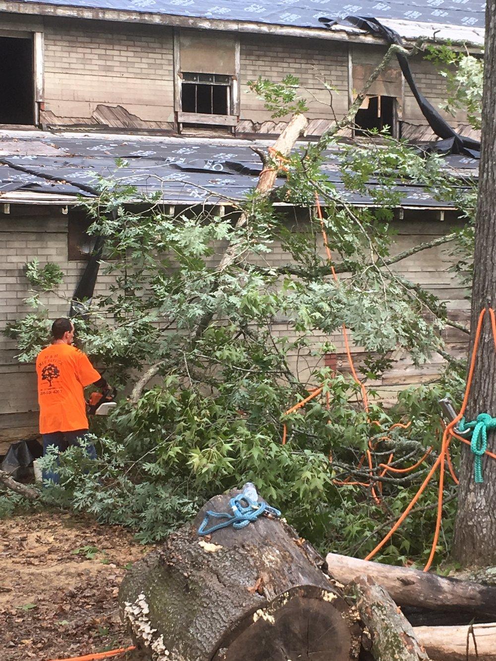 Hurricane Tree Damage