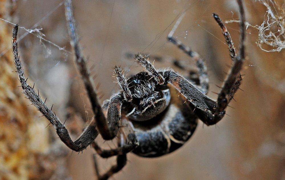 spider-564635_1920.jpg