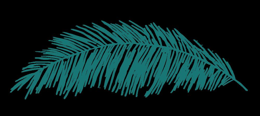 C+CT_Leaf_Palm_RGB.png