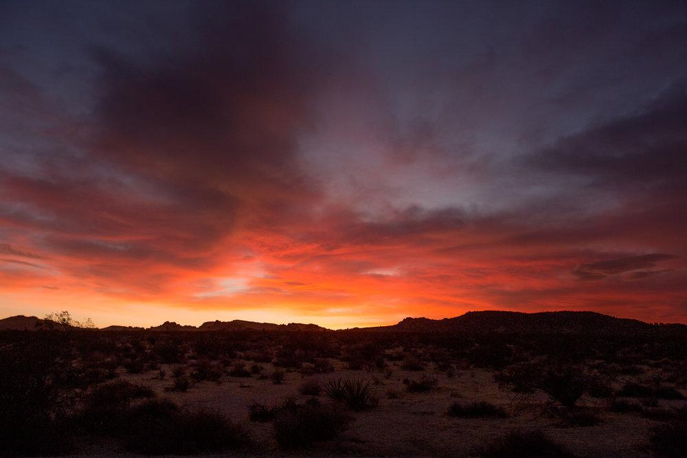 nicole-daacke-photography-joshua-tree-cactus-garden-engagement-photos-joshua-tree-national-park-enegagement-session-edgy-hipster-california-cholla-garden-golden-sunset-session-88.jpg