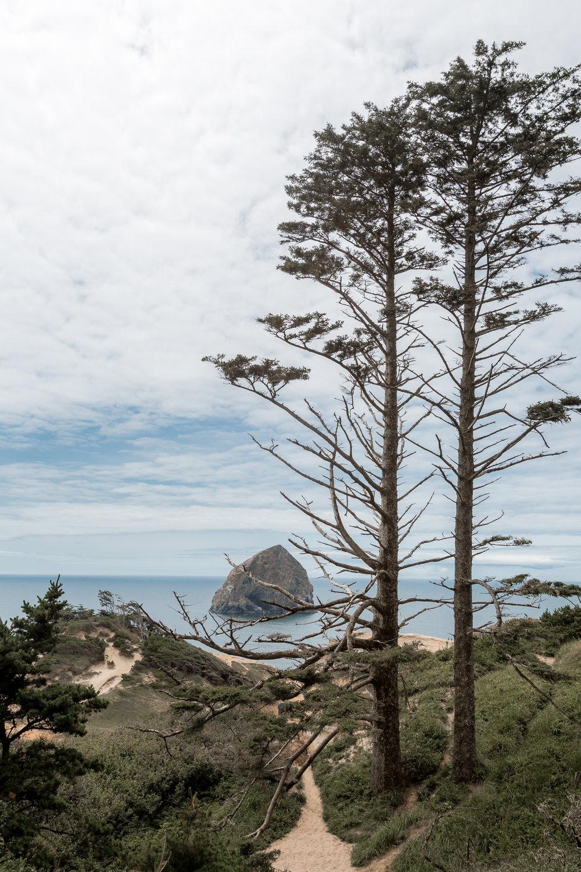nicole-daacke-photography-oregon-coast-landscapes-elopement-photographer-wedding-photography-adventure-lifestyle-roadtrip-along-oregon-coast-cape-kiwanda-oceanside-beach-cannon-beach-oregon-pnw-12.jpg