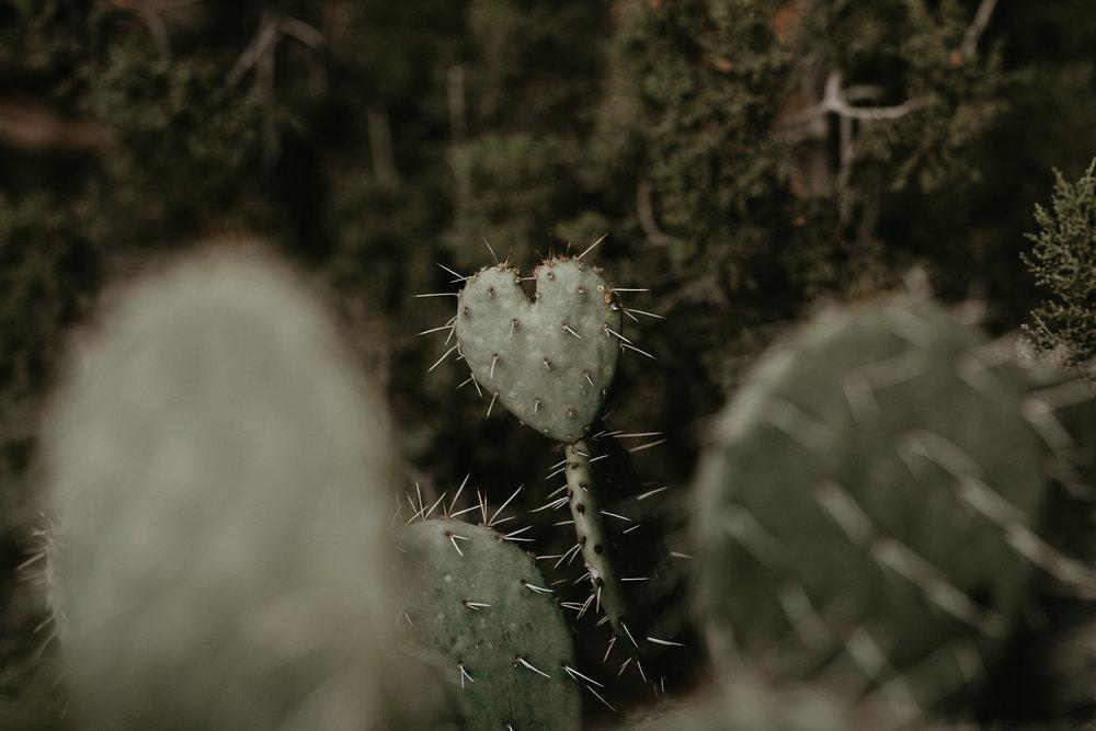 nicole-daacke-photography-sedona-arizona-destination-elopement-wedding-photographer-catherdral-rock-hiking-elopement-sedona-river-elopement-photos-desert-rock-wedding-photographer-laid-back-spontaneous-elopement-31.jpg
