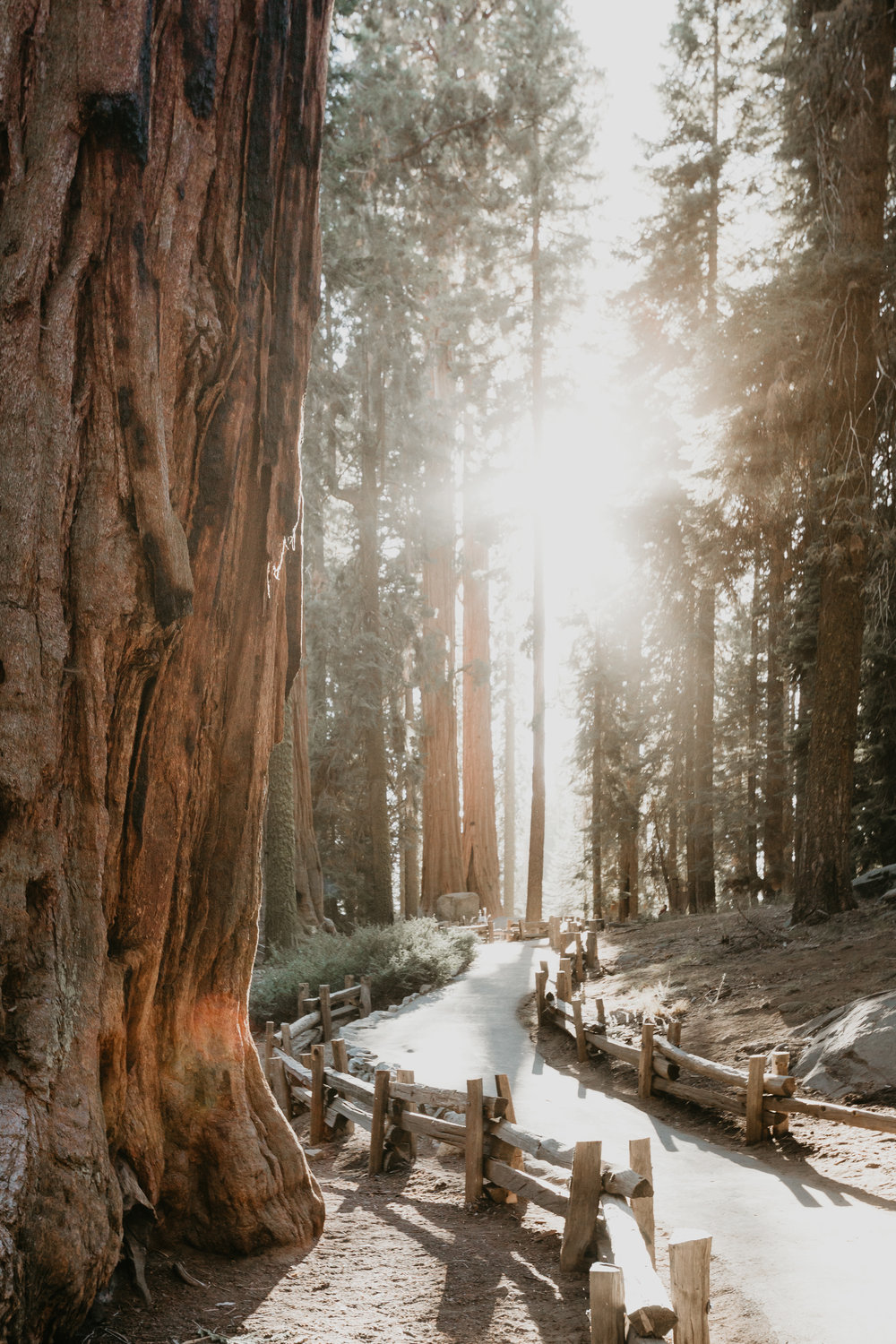 nicole-daacke-photography-sequoia-national-park-adventurous-elopement-sequoia-elopement-photographer-redwoods-california-intimate-wedding-photographer-1.jpg