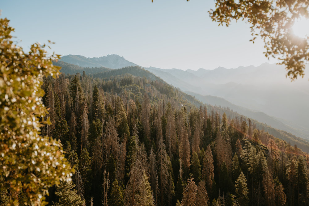 nicole-daacke-photography-sequoia-national-park-adventurous-elopement-sequoia-elopement-photographer-redwoods-california-intimate-wedding-photographer-4.jpg