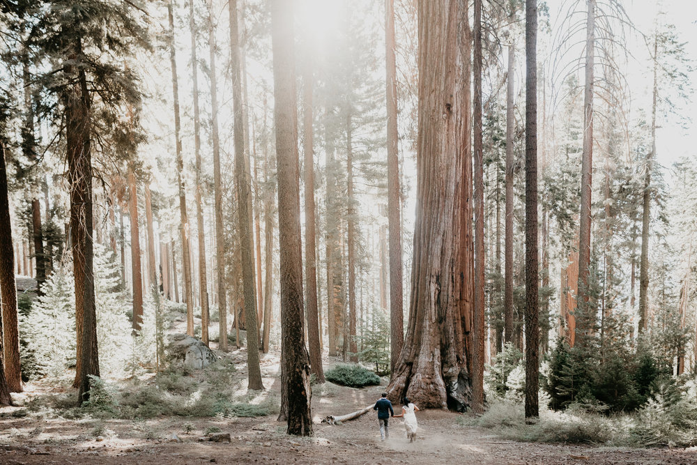 nicole-daacke-photography-sequoia-national-park-adventurous-elopement-sequoia-elopement-photographer-redwoods-california-intimate-wedding-photographer-17.jpg