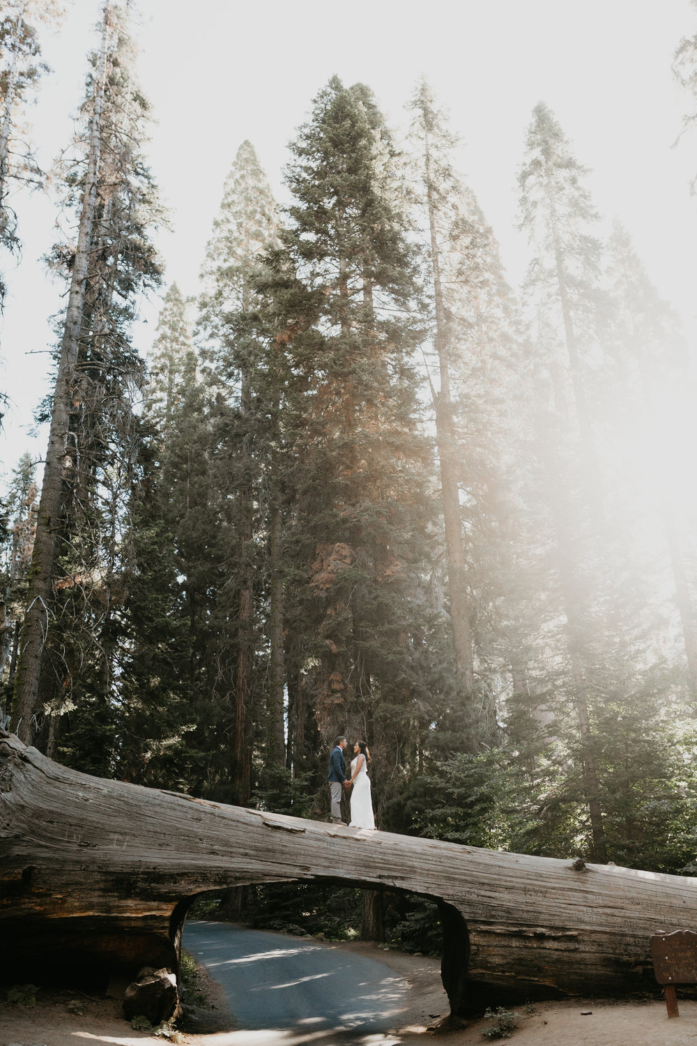 nicole-daacke-photography-sequoia-national-park-adventurous-elopement-sequoia-elopement-photographer-redwoods-california-intimate-wedding-photographer-20.jpg