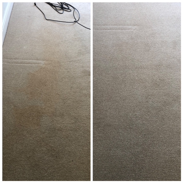 Carpet Cleaning London Before and After.JPG