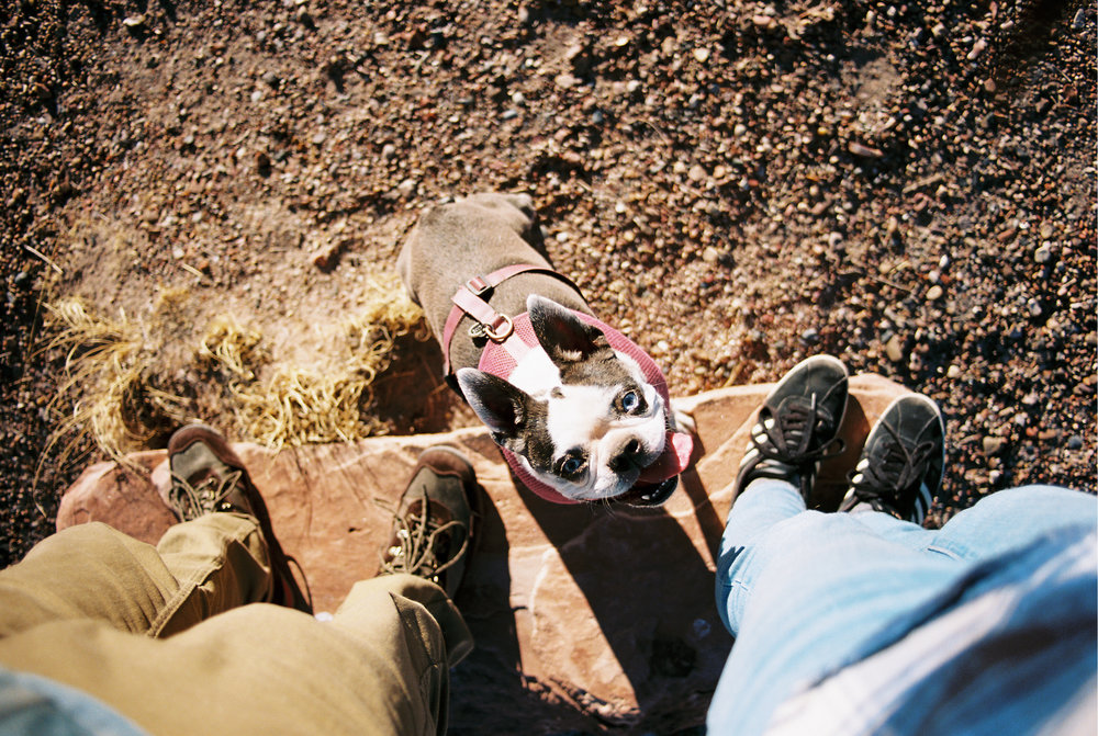 Dog Friendly Road Trip To Arizona and New Mexico // Laura Goldenberger
