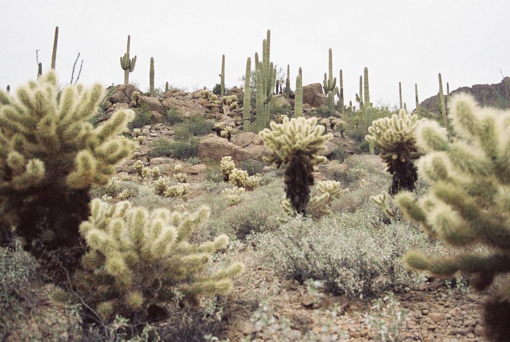 Saguaro National State Park // Laura Goldenberger
