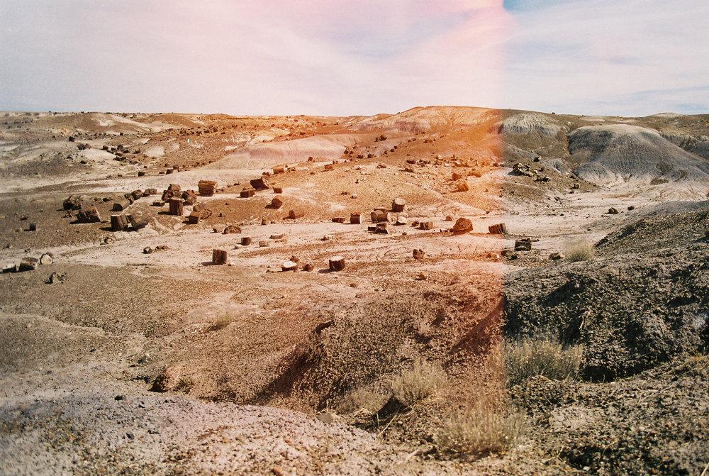 Petrified National Forest // Laura Goldenberger