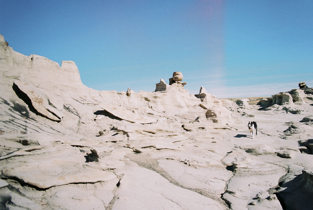 Dog Friendly Road Trip to New Mexico // Laura Goldenberger