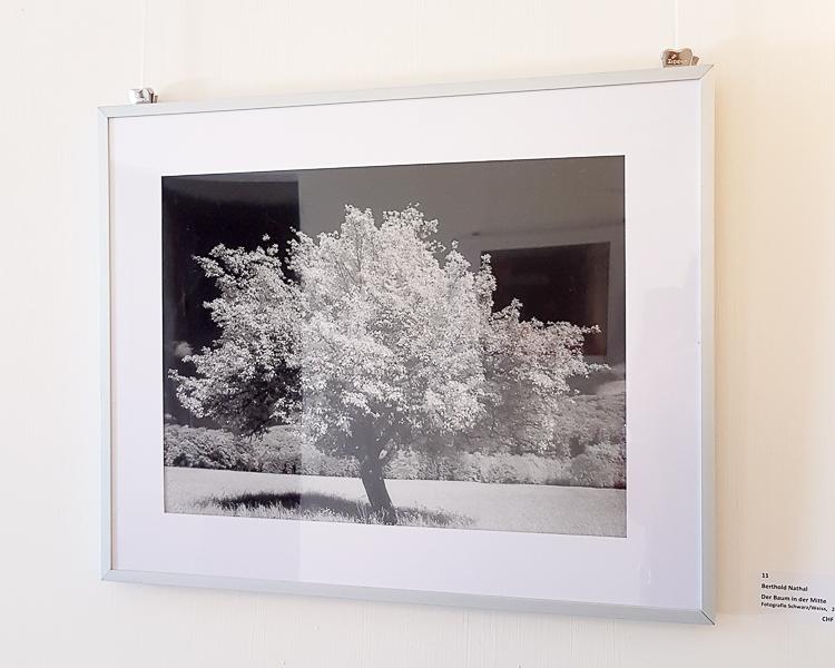 Der Baum in der Mitte | Berthold Nathal